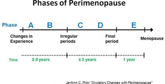 phases_of_perimenopause